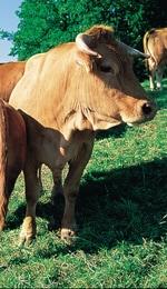 Bio – Fleisch von der Bäuerlichen Erzeugergemeinschaft Schwäbisch Hall
